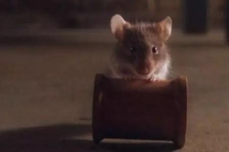 动物是主角的影片应该怎么拍