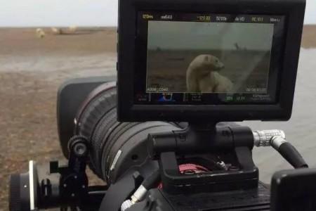 寻熊日记 | 佳能CN20x50 IAS H/P1电影伺服变焦镜头纪录片拍摄手记