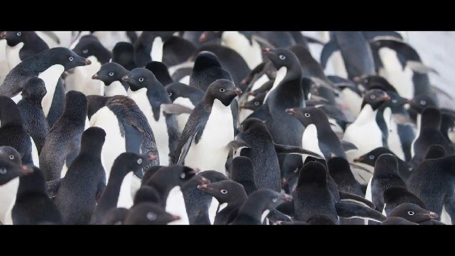 获得全球野生动物摄影师一致公认的镜头是哪款?